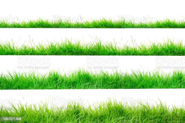 Photo of Green Grass Border isolated on white background.The collection of grass.(Manila Grass)The grass is native to Thailand is very popular in the front yard.