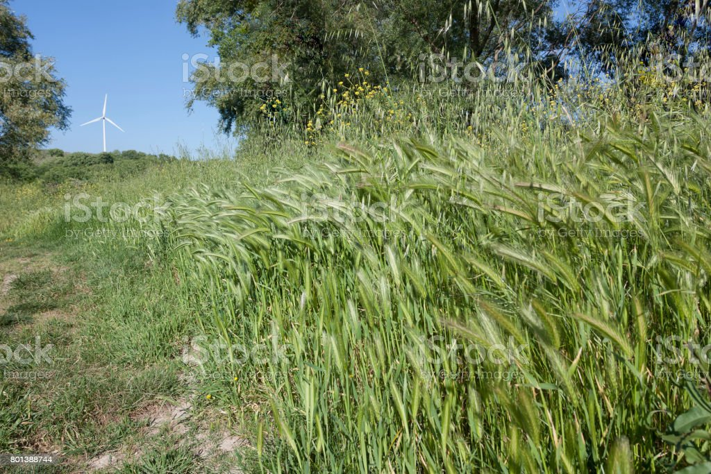 Green grass bundle and a wind shovel in the background stock photo