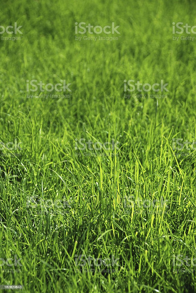 Green grass close up royalty-free stock photo
