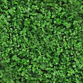 Dichondra | Grass textures, Landscape design, Front garden