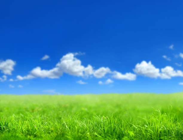 green grass countryside landscape stock photo