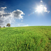 green grass countryside landscape over blue sky with shining sun