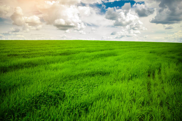 Green grass field and bright blue sky background stock photo