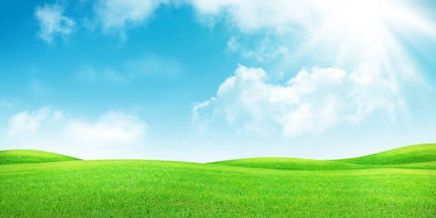 Grünes Grasfeld und klarer blauer Himmel – Foto