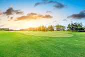 Green grass field and forest scenery at sunrise