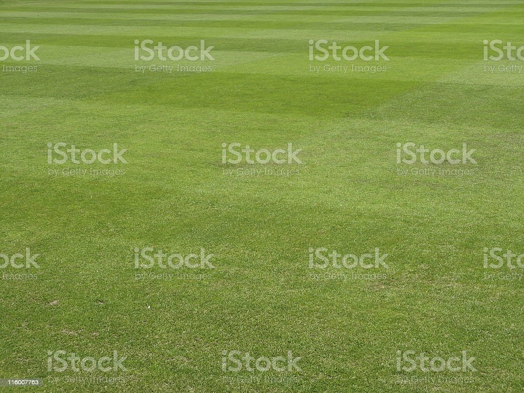 Green grass field background royalty-free stock photo