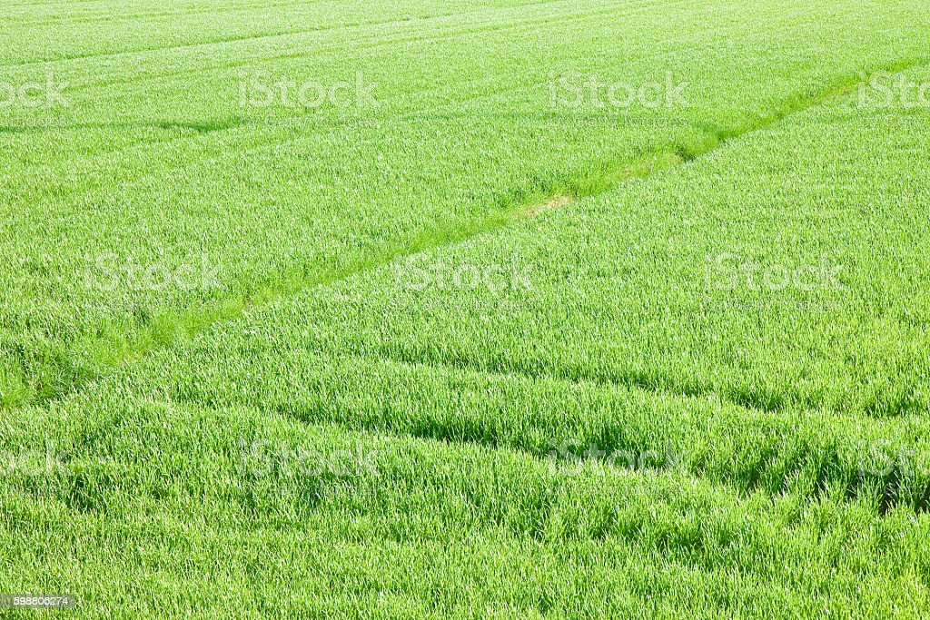grass field from above. Green Grass Field Backgrounds Seen From Above Royalty-free Stock Photo