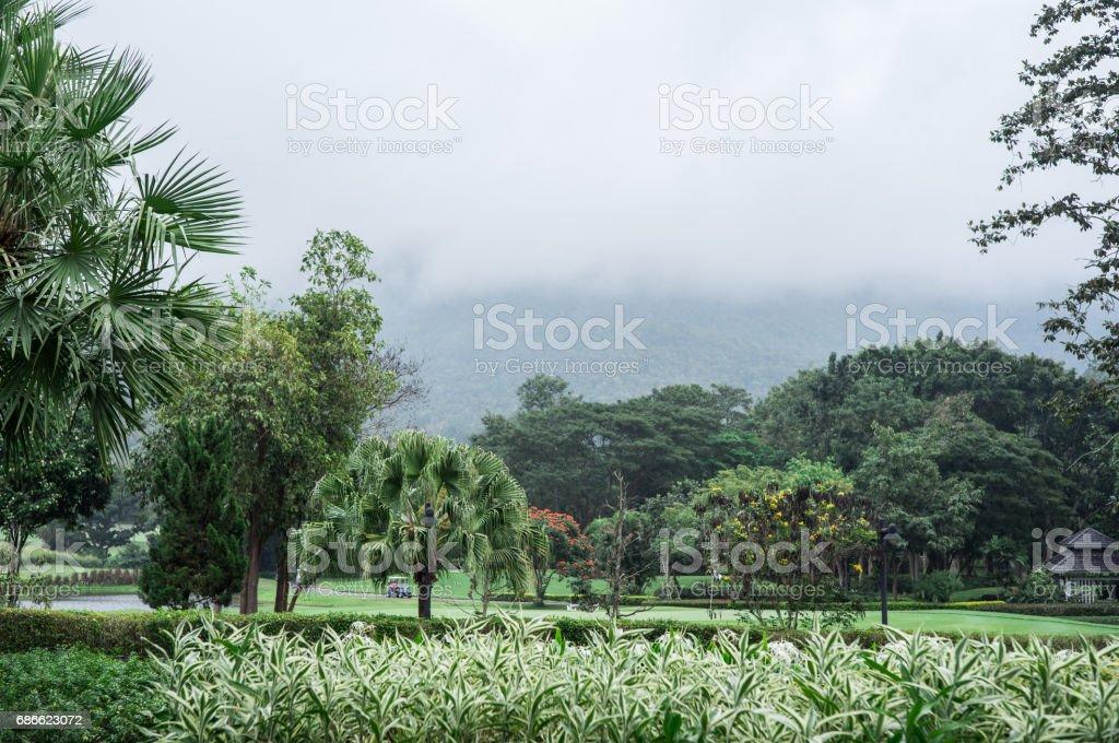 Champ d'herbe verte dans le parc de la grande ville, paysage vue golf sur le magnifique parcours de golf. photo libre de droits