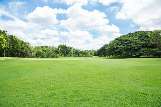 green grass field à grand parc de la ville - pelouse photos et images de collection