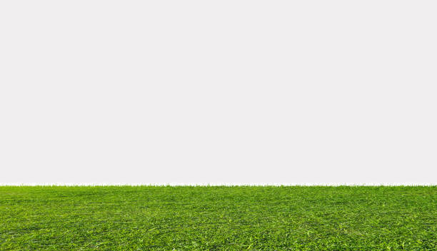 green grass field, isolated on white background - diminishing perspective stock pictures, royalty-free photos & images