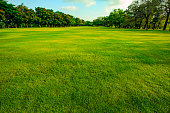 green grass  field of public park in morning light