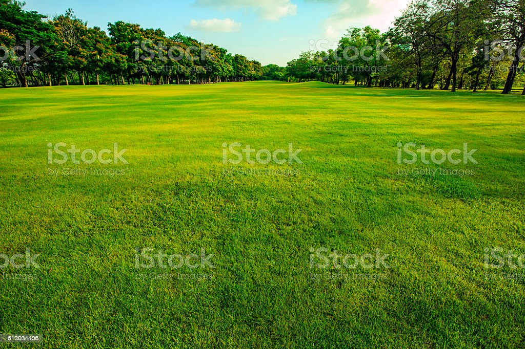 green grass  field of public park in morning light – Foto