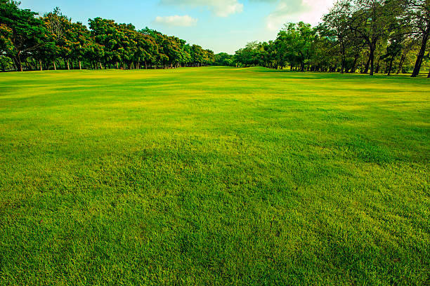 green grass  field of public park in morning light - diminishing perspective stock photos and pictures