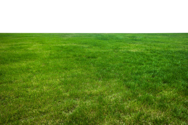 Green grass field on mountain isolated on white background. stock photo
