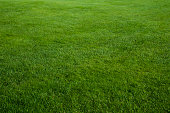 istock Green grass field 182361617
