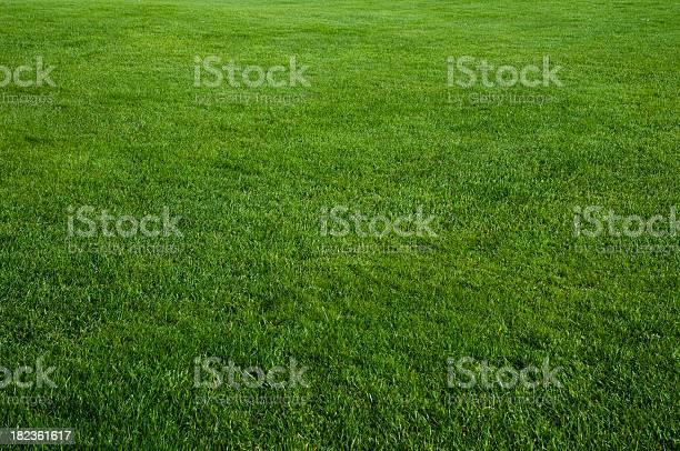 Green grass field picture id182361617?b=1&k=6&m=182361617&s=612x612&h=qiopddwd3 yiclndwelcxppmfylstddao6ygj7nyblm=