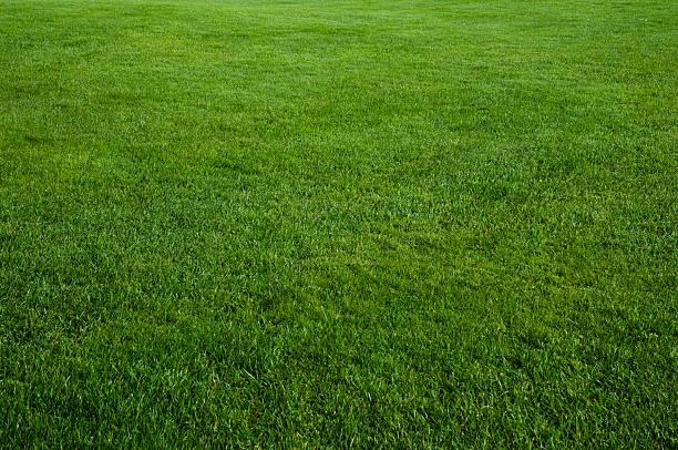 Erba verde campo - foto stock