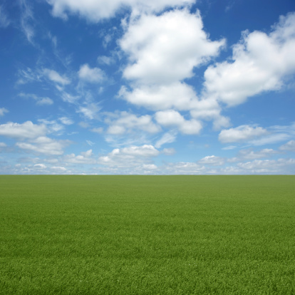 green grass field with bright cloudy sky (XXL)