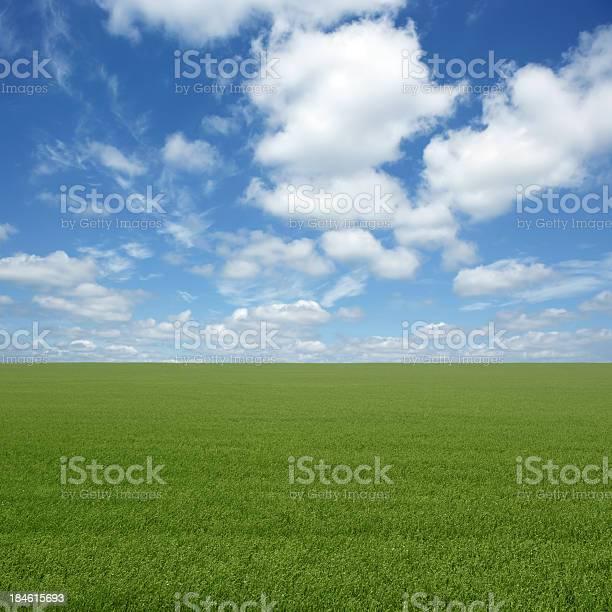 Photo of XXL green grass field