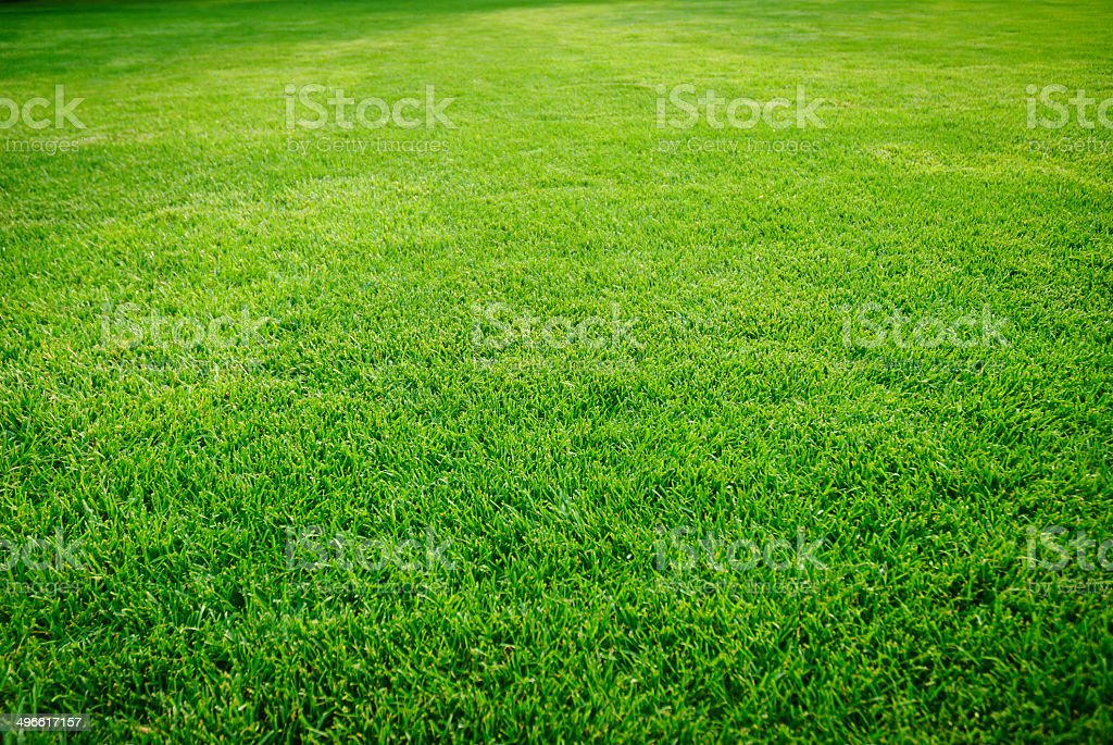 Green grass field – Foto