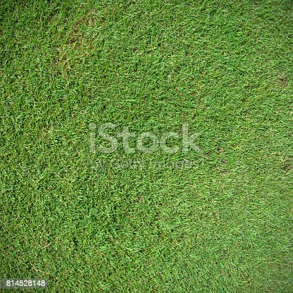 474672896 istock photo Green grass field 814528148