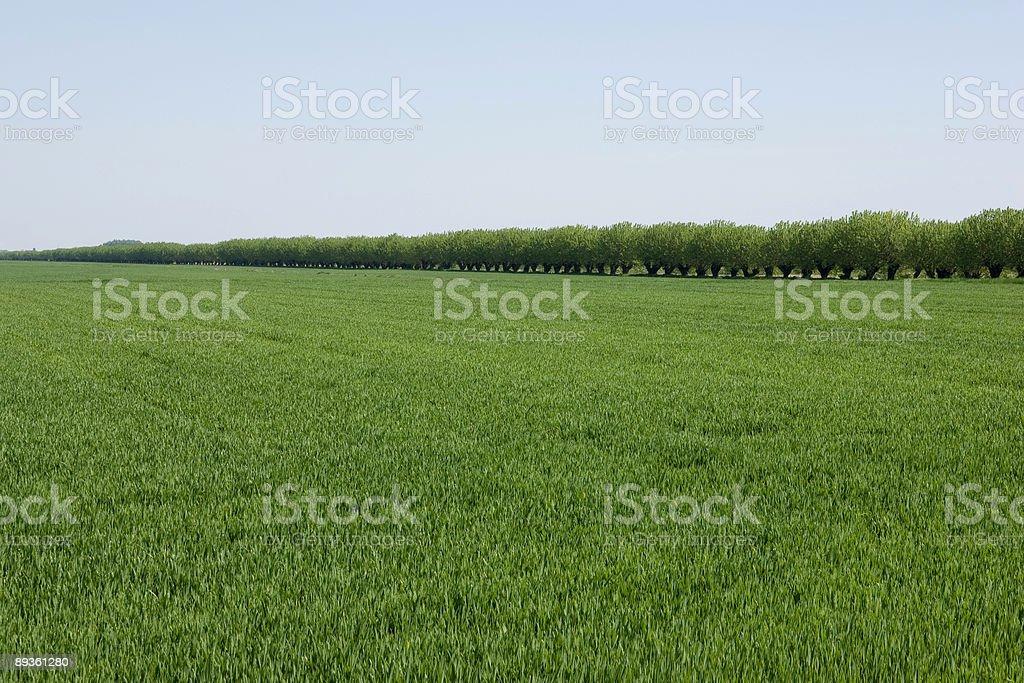 Erba verde campo foto stock royalty-free