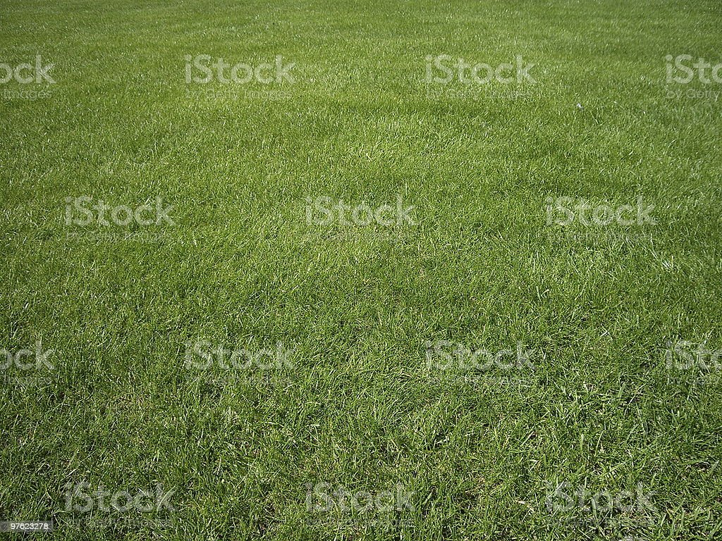 Green Grass field royaltyfri bildbanksbilder