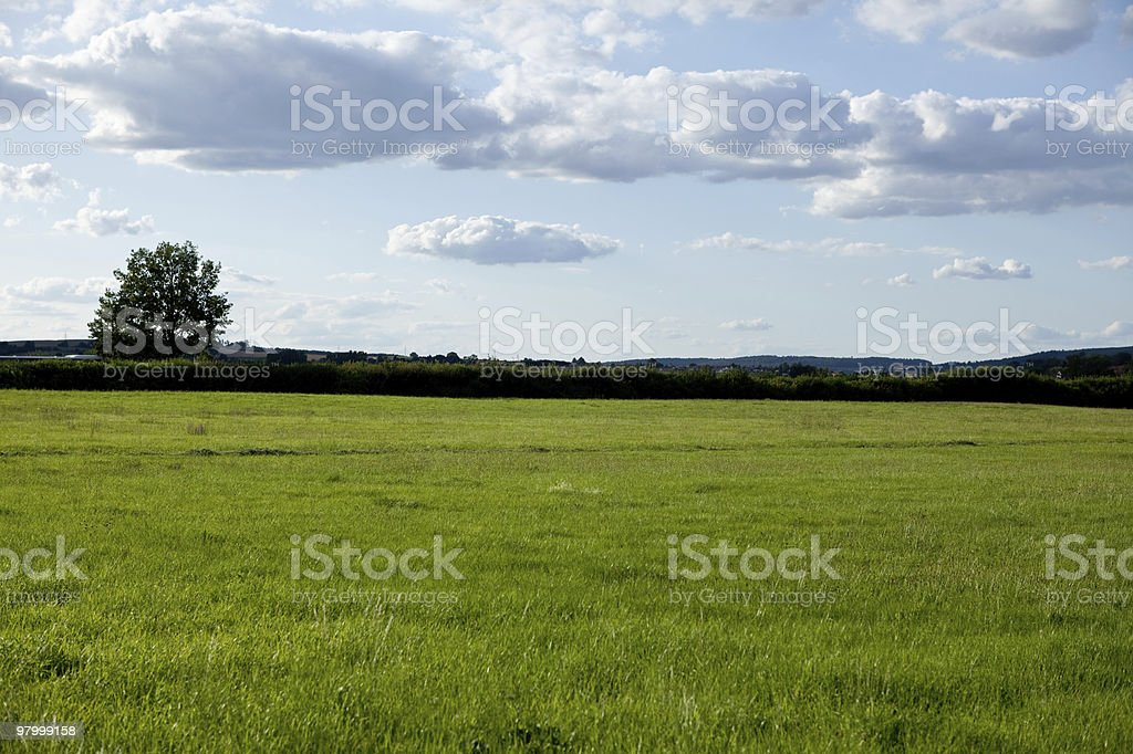 green grass field tree white clouds blue sky summer sunny royalty-free stock photo