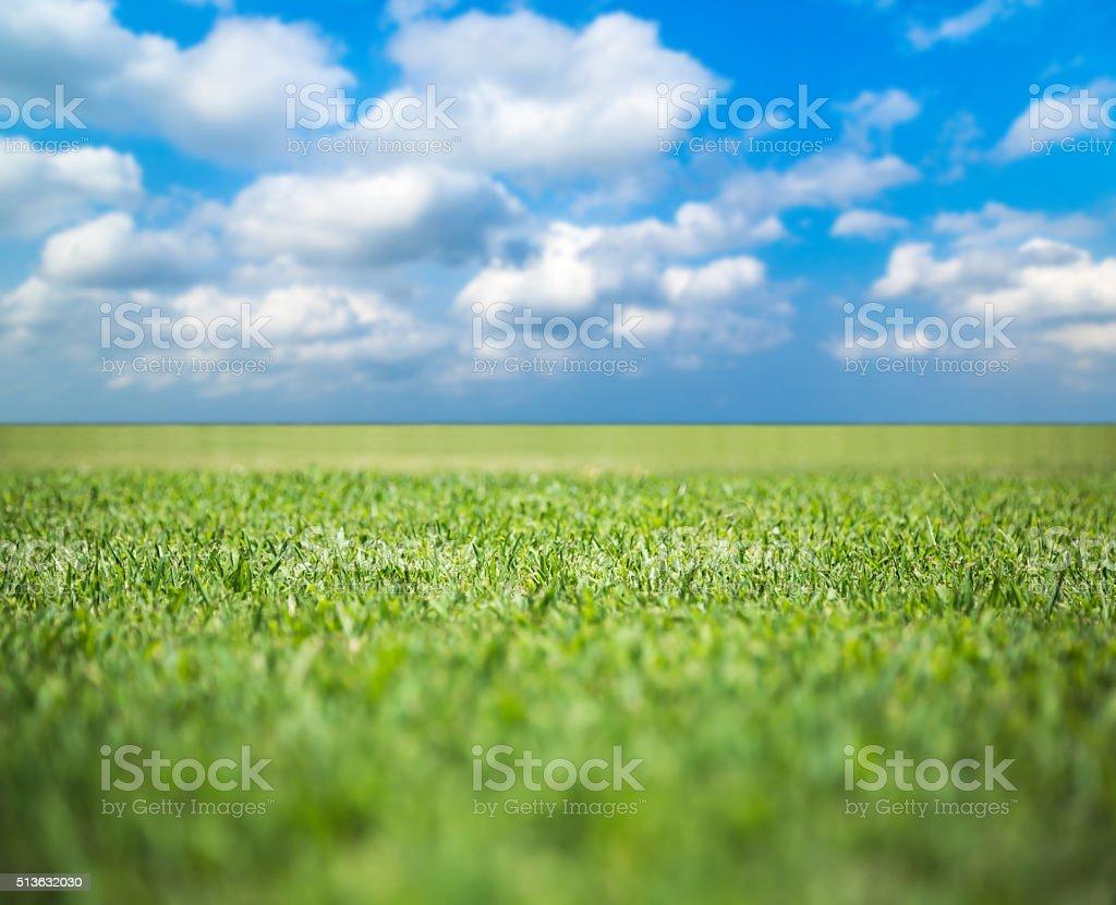Green grass field under blue sky stock photo
