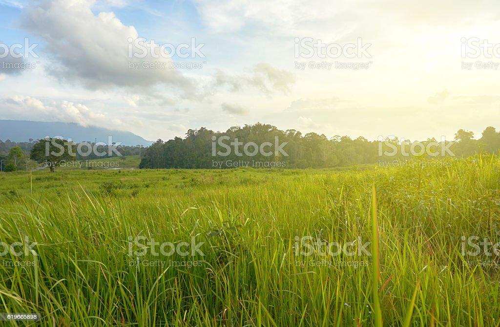 green grass field under rim light. stock photo
