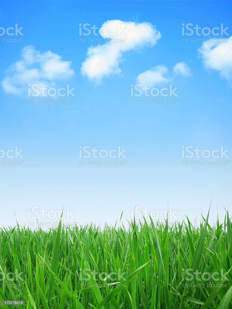 Green grass field with a cloudy blue sky royalty-free stock photo