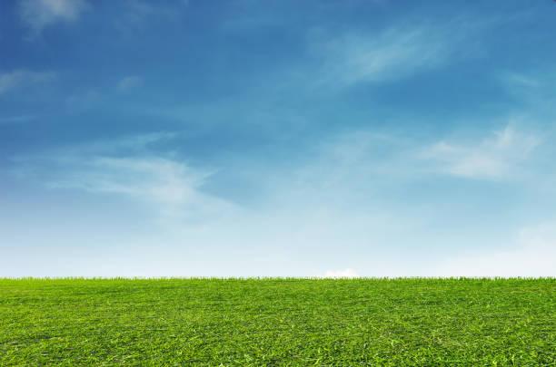 campo de grama verde com fundo azul do céu e nuvens brancas - gramado terra cultivada - fotografias e filmes do acervo
