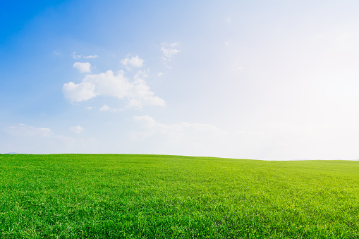 Backgrounds, Grass, Cloud - Sky, Agricultural Field, Meadow, Lawn, New Zealand