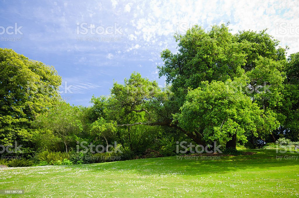 Green grass field with lush foliage and trees stock photo