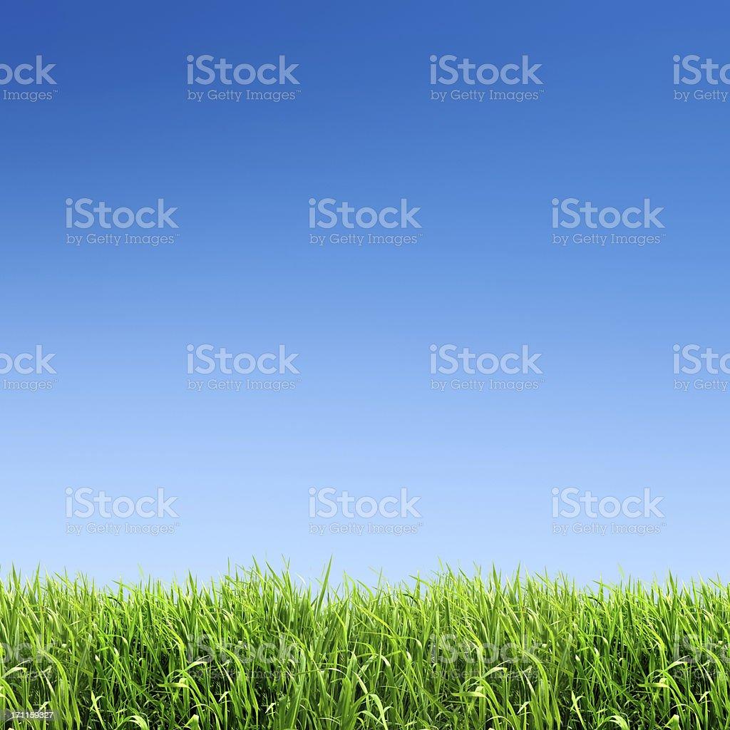 XXXL green grass field - with many copyspace stock photo