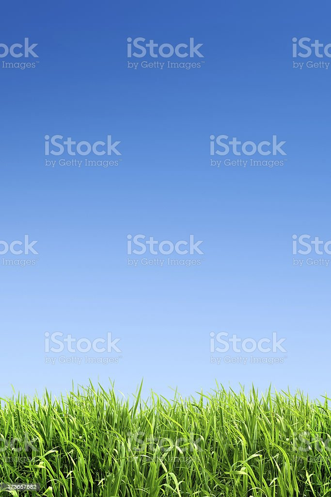 XXL green grass field - with many copyspace royalty-free stock photo