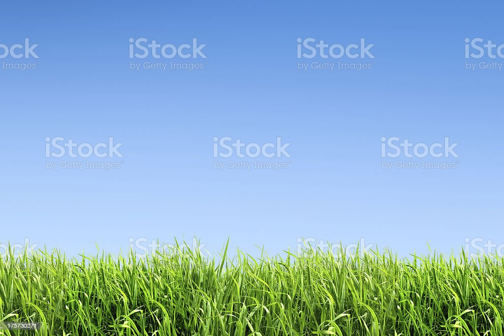 XXL green grass field - with many copyspace stock photo
