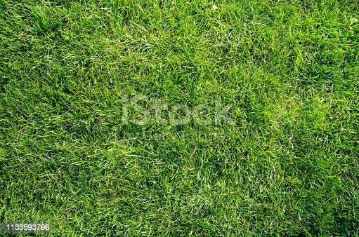 Authentic natural green grass lawn flat lay background