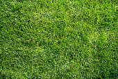 Authentic seamless natural green grass lawn flat lay background