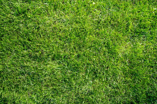 green grass flat lay background - erva imagens e fotografias de stock