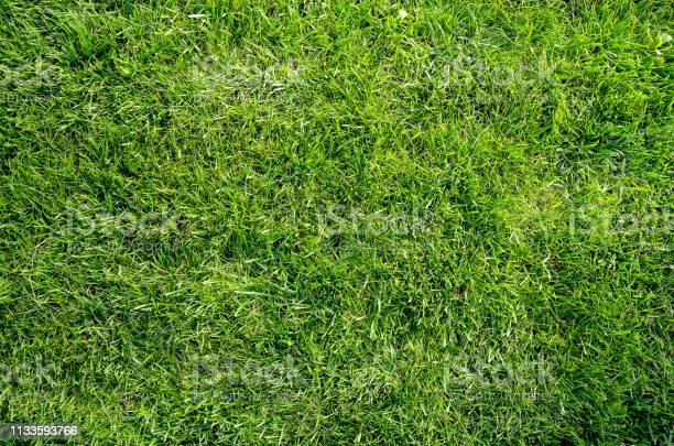 Photo of Green grass flat lay background