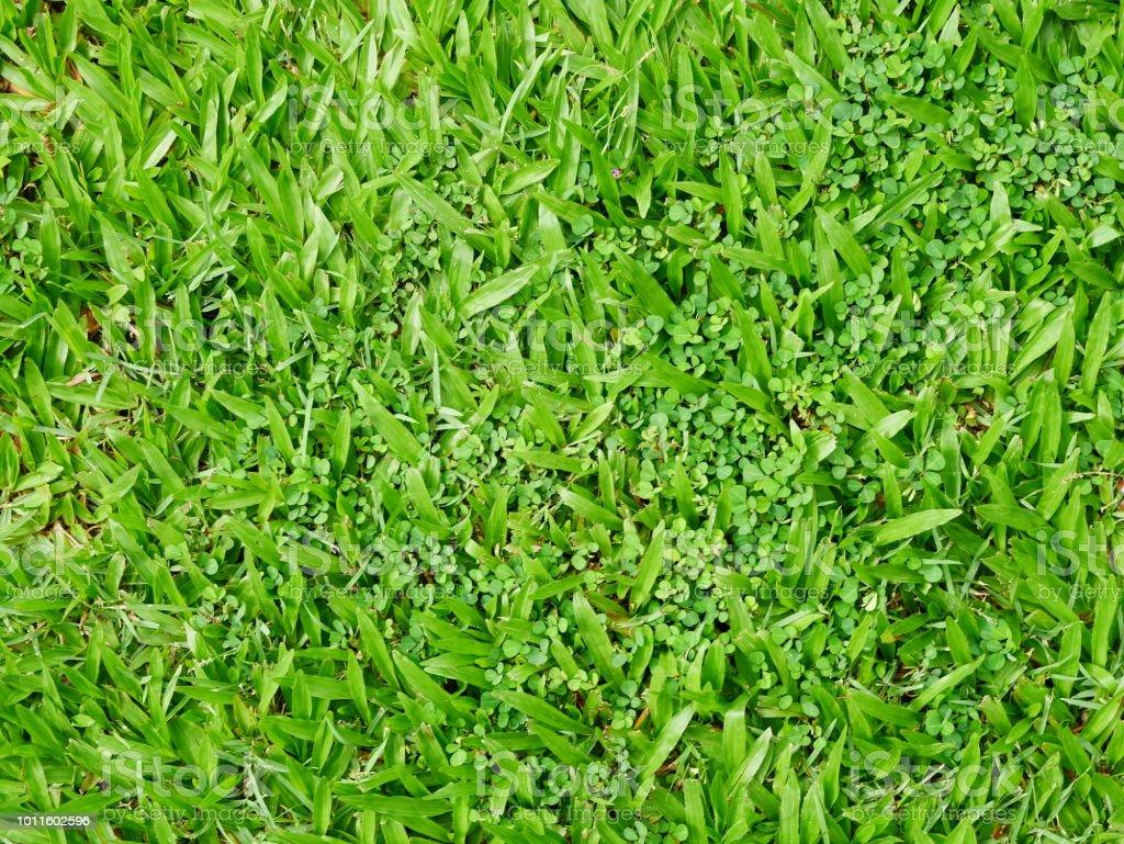 Playing Field, Field, American Football Field, Grass, Backgrounds