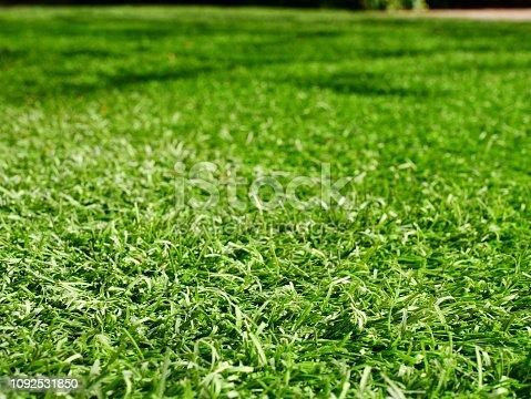 istock Green grass football pitch 1092531850