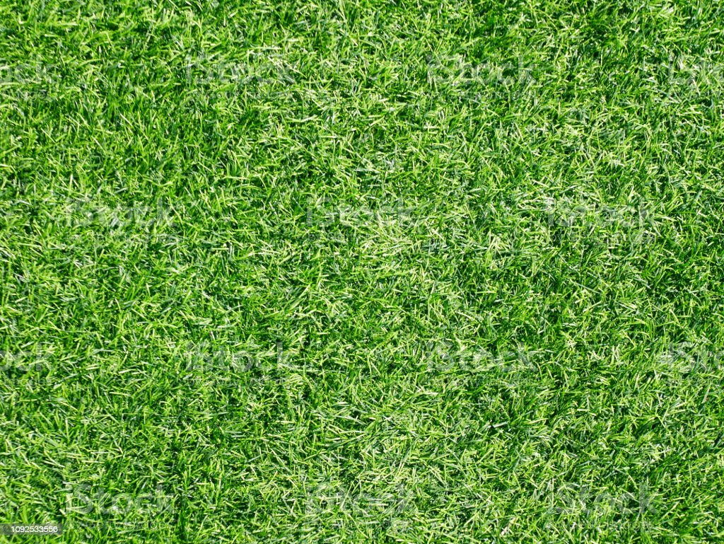 Lawn, Putting Green, The Natural World, Grass, Front or Back Yard