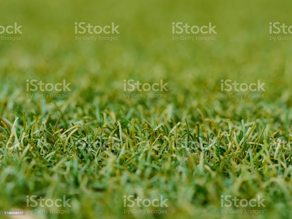 Lawn, Textile, Flooring, Grass, Artificial