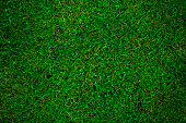 green grass football pitch