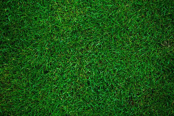 gramado campo de futebol - gramado terra cultivada - fotografias e filmes do acervo
