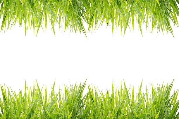 Green grass frame isolated on white background picture id493269658?b=1&k=6&m=493269658&s=612x612&w=0&h=a aedt4rr1ud23fvg3fgqnsousgzjwcfexxijq8ijfw=