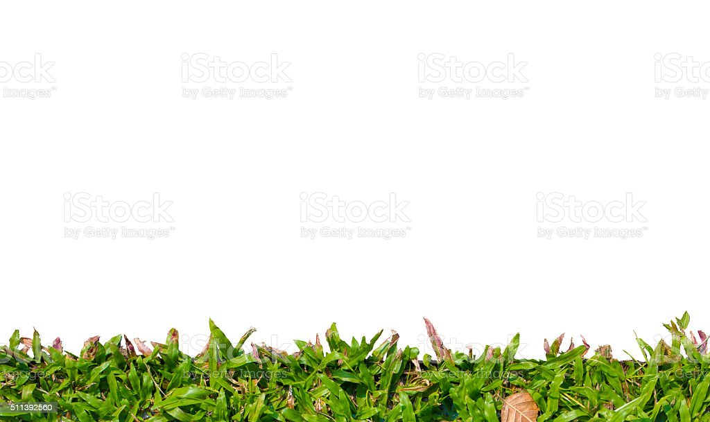 Green grass frame isolated on white background stock photo