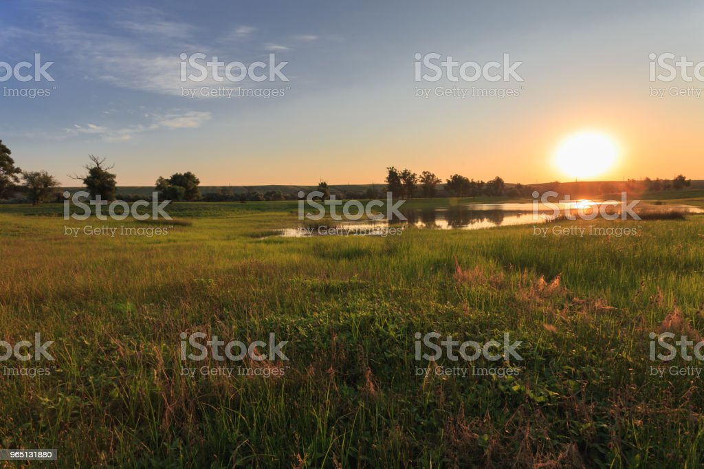 Green grass grows on the Bank of the swamp. The sun rises from the horizon and glows in the water zbiór zdjęć royalty-free